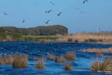 جمعيات بيئية تراسل صاحب الجلالة لإنقاذ آخر منظومة بيئية للمياه العذبة بجهة الدار البيضاء الكبرى